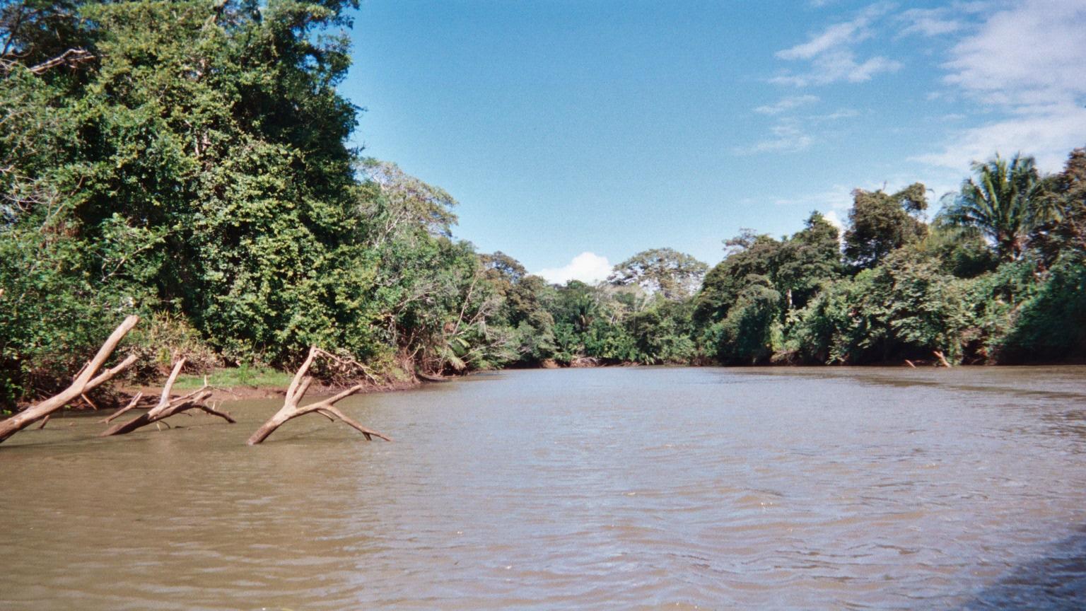 junglepanorama.jpg